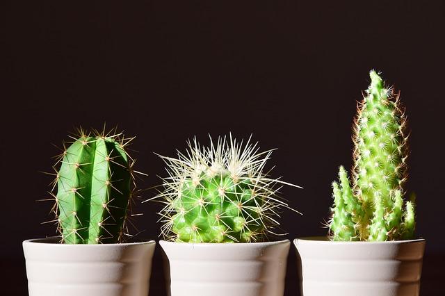 různé kaktusy